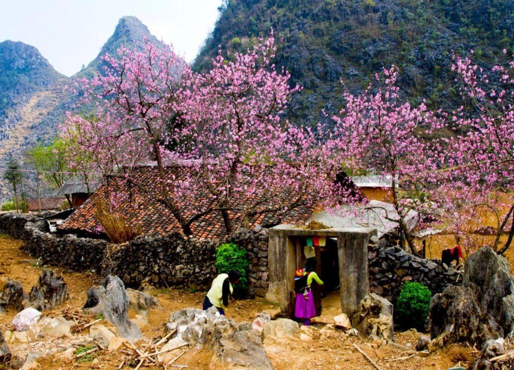 Du lịch hà Giang vào mùa Hoa Đào nở