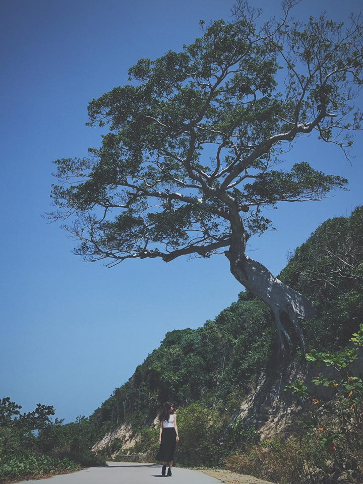 cây Cô đơn Nam Du