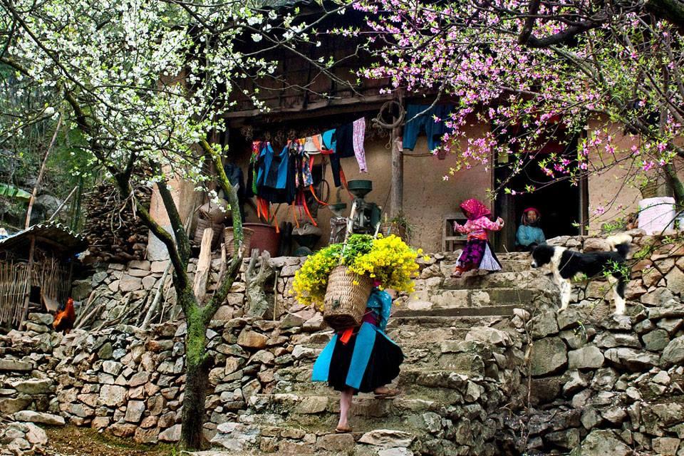 Tour du lịch Hà Giang mùa hoa đào