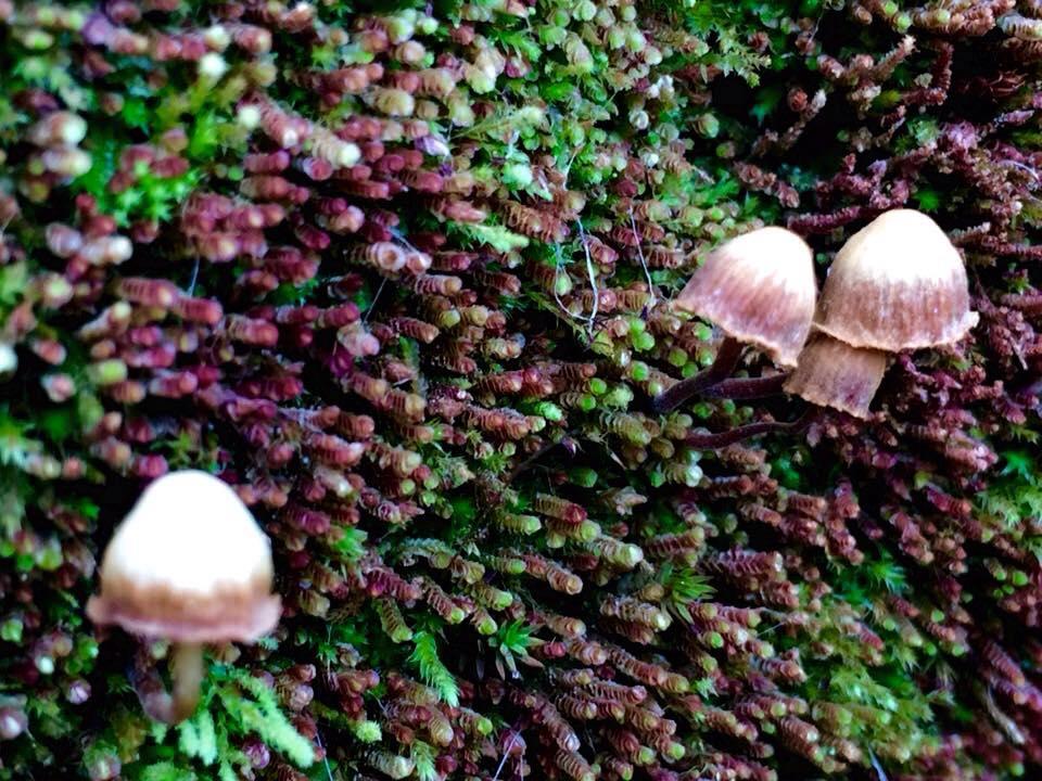 Thảm thực vật ở Chiêu Lầu Thi