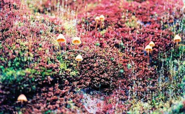 """Bức """"tường thành"""" phủ đầy rêu trên đường lên dốc."""