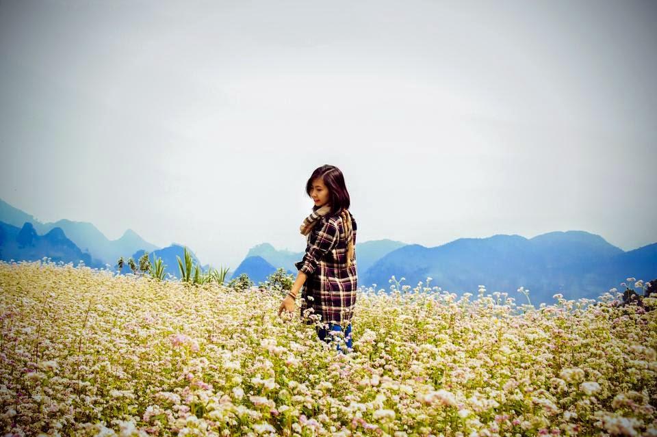 Hoa tam giác mạch đẹp ngỡ ngang điểm ngắm Lũng Cú