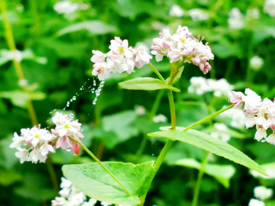 Những nụ hoa bé tí ti trông thì yểu điệu