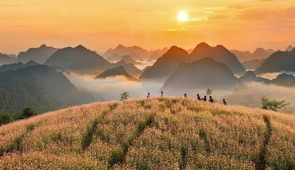 Du lịch mùa Hoa Tam Giác Mạch