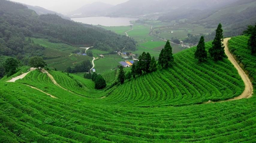 Đồi chè Tân Cương hút mắt một màu xanh, địa điểm du lịch Thái Nguyên hấp dẫn