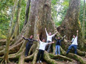 Cây chò ngàn năm ở rừng Cúc Phương(Ảnh internet)