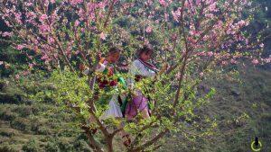 Hà Giang mùa hoa mận, hoa đào là điểm đến lý tưởng trong chuyến du lịch Tết âm 2018. Ảnh: Nam Chấy