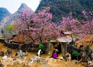 Vẻ đẹp vừa hùng vĩ, vừa nên thơ ở Hà Giang vào mùa xuân. Ảnh Internet