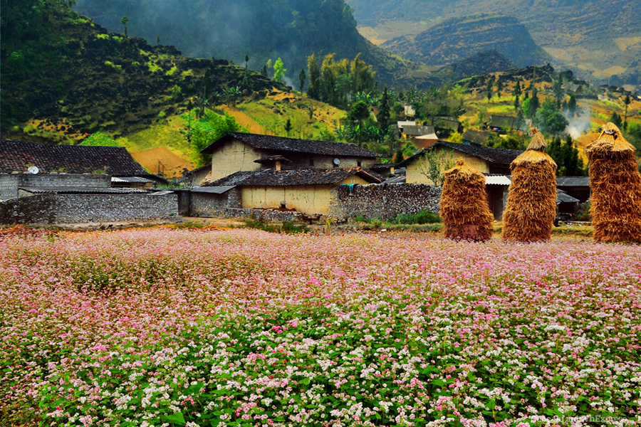 Best time to Ha Giang