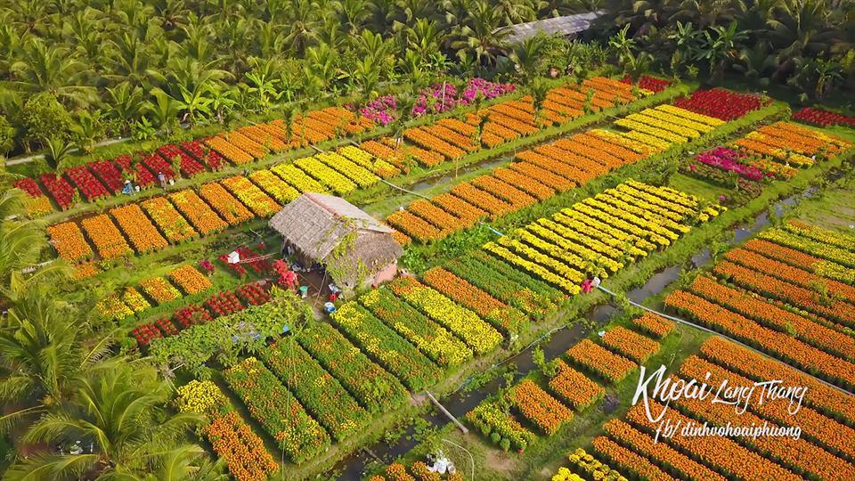 Làng hoa Cái Mơn- Làng hoa TẾT đẹp nhất Việt Nam. Ảnh Khoai Lang Thang