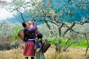 Sapa mùa xuân mang vẻ đẹp tràn đầy sức sống. Ảnh Internet