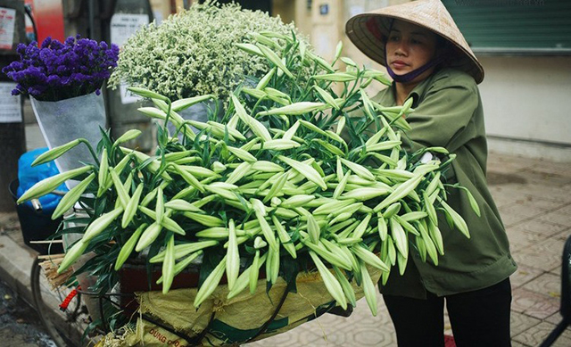 Hoa loa kèn, một loài hoa đặc trưng của Hà Nội vào những ngày tháng 4
