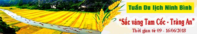 Mùa lúa vàng Tam Cốc