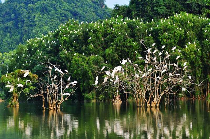 Vườn chim Thung Nham có vẻ đẹp hoang sơ và quyến rũ