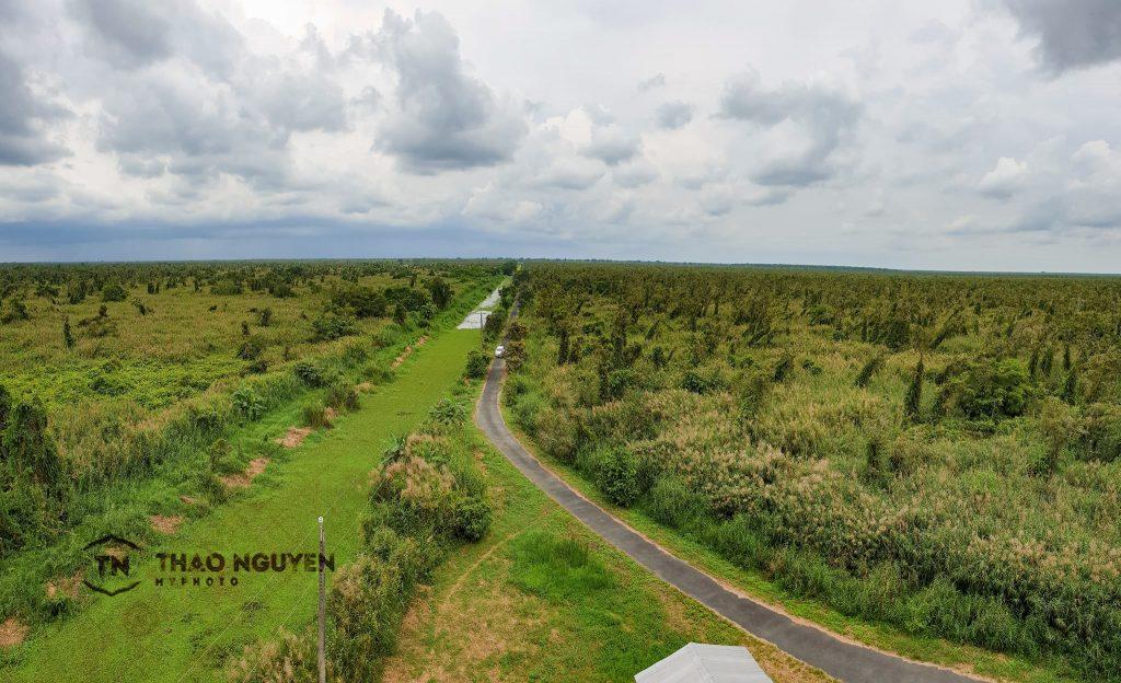 Toàn cảnh khu rừng U Minh từ trên đài quan sát