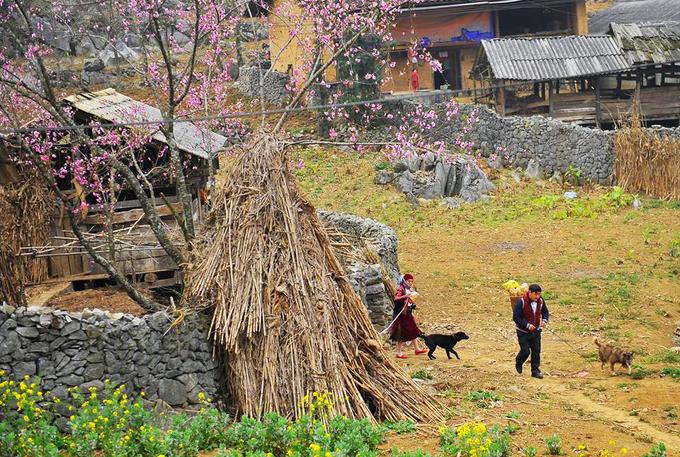 Mùa đẹp nhất ở Hà Giang