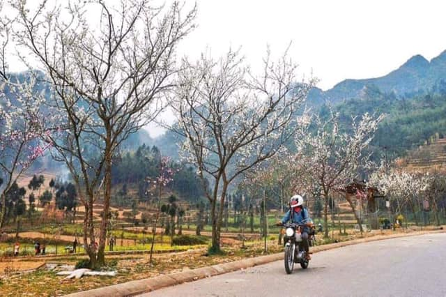 Đi giữa mùa xuân trên cao Nguyên Đá. Ảnh Hai Yến Chu