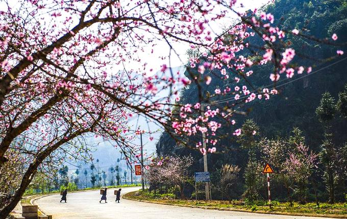 Mùa xuân ở Hà Giang