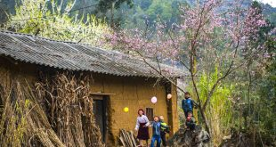 Dưới tán hoa đào, những cậu bé dân tộc Mông vô tư cười đùa, nô nghịch.