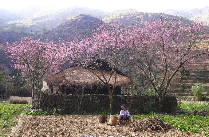 Ảnh hoa đào đẹp ở Hà Giang